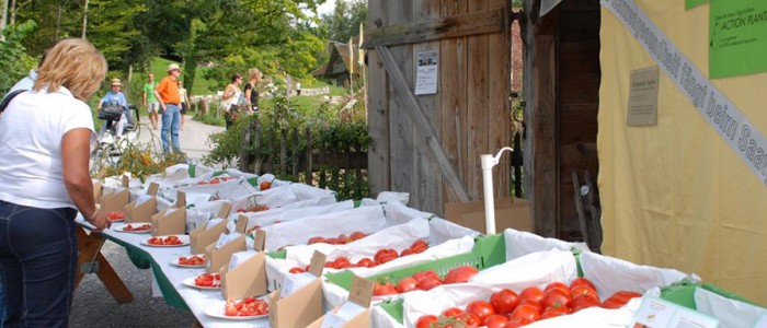 Tomaten aus unserem Garten